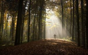 Bath-in-the-light-tree-sun-shine-meaning-god-lord-heaven-divine-single-man-self-forest-middle-tree-tall-sun-shine-rays